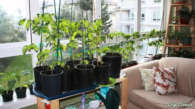 Indoor Gardens for Small Apartments | Suspended and Container Gardening