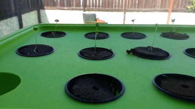 """Hydroponic Seed Germination"" by Epic Gardening"