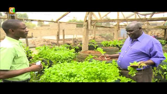 Smart Farm: Vertical Sack Farming