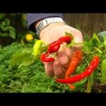 Graham Ross: Winter Vegetable Garden, Ep 22 (27.06.14)