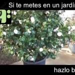 [Consejos de Jardineria] Consejo 15   Jardiner