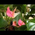 The Garden Gurus – Indoor Living Walls