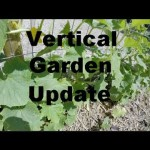 Vertical Gardening – DIY Cucumber Trellis – Week 5