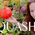 Vertical Gardening with Squash & Pumpkins: How to grow a vertical garden with Scarlett