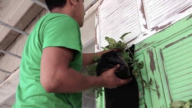 Muros Verdes- Jardines Verticales Huichol – Tropicalia Cancun