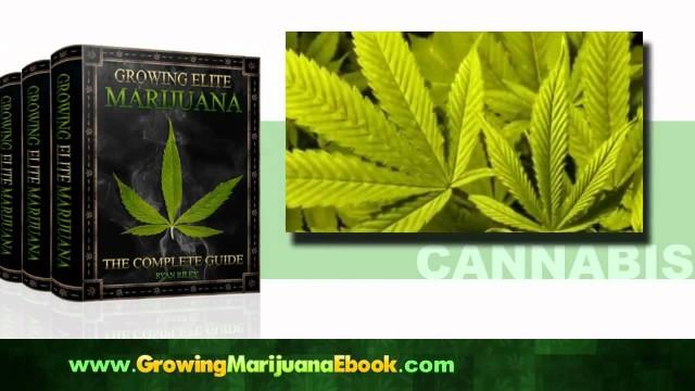 Growing Marijuana Indoors | Outdoors Tips, E-Book Help for Weed Growing 2012