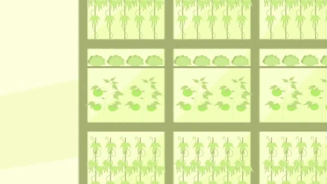 Vertical Farming Advantages and Disadvantages – Vertical Farming Facts