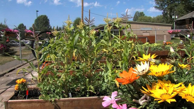 TYH: The Benefits Of Gardening At A Young Age