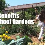 The Benefits of School Gardens