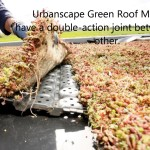 Urbanscape DIY – How to install a Green Roof