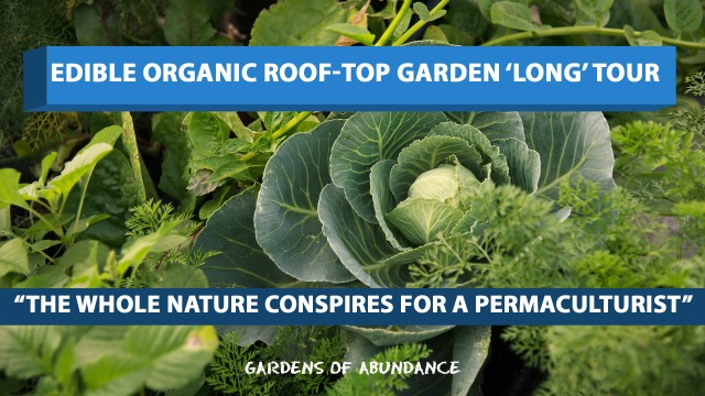 Edible Organic Roof-top Garden 'Long' tour! – Hyderabad, India