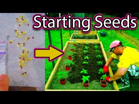 How to Start Seeds the EASY Way. tomato pepper vegetable garden kale tomatoes