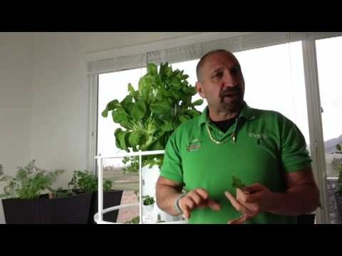 Growing The Tower Garden Indoors Weeks 4-5 (video #4)