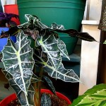 Indoor Gardening tips and some NEW plants!