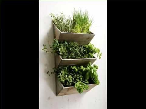 Beautiful House Plants Picture Gallery For Your Office Home Or Garden | Indoor Wall Hanging
