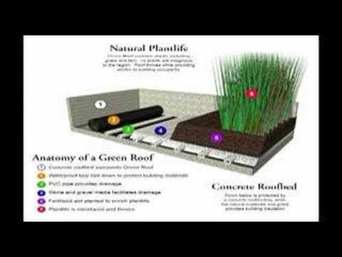 Green Roofing – A Simple Step Toward Sustainability