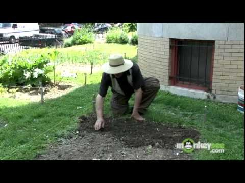 Vegetable Garden – How to Plant Seeds Outdoors