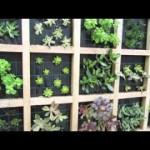 Easy vertical succulent garden design ideas