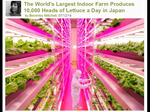The World's Largest Indoor Farm Produces 10,000 Heads of Lettuce a Day in Japan