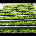 Vertical hydroponic farming ideas