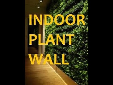 Indoor Plant Wall For Your Home