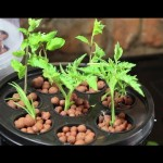 Aero-Pot Aeroponics System Review – My new Hydroponics Toy