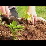 Vegetable Gardening : How to Plant Raised Vegetable Beds