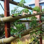 Vertical hydroponic VEG gardens in La Jolla