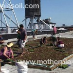 Emory Knoll Farms / Green Roof Plants