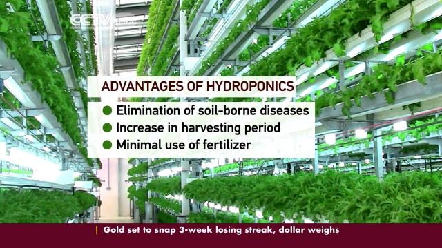 Hydroponics Revolutionize Farming in Kenya