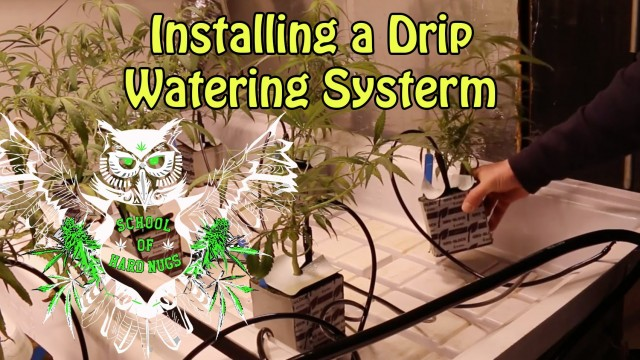 Installing a Drip System | Learn How to Grow Marijuana at Home | Hydroponics | Cannabis Cultivation