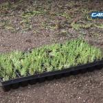 Roof Garden Installation Video