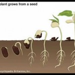 The Seed Germination Process