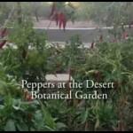 Urban Gardens Around Arizona