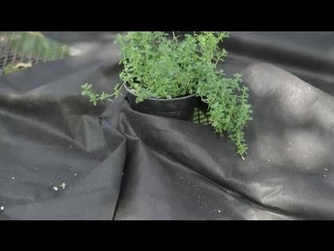 Pros & Cons of the Black Plastic Used in Vegetable Gardening : Garden Space