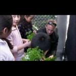 School Gardens 2.0-Slow Food Vertical Garden