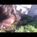 School Gardening/ Wwoofing at Mt.Diablo High School Concord,CA