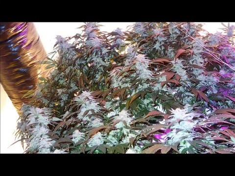 Vertical Rotating Garden Cannabis