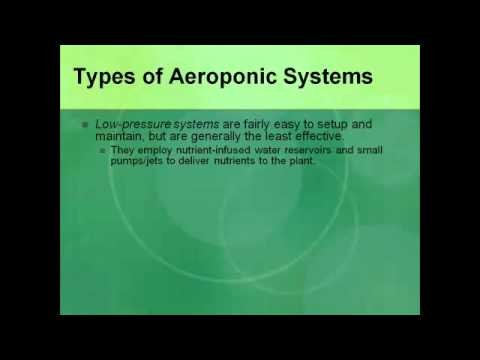Advantages of Aeroponics Systems over Hydroponic Systems