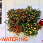Woolly Pocket Living Wall Planter – Garden House Design
