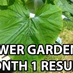 """""""Tower Garden One Month Results"""" by Epic Gardening"""