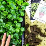 Types of Plugs for Starting Seeds in Commercial Vertical Hydroponics