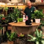 Indoor Gardening for Houseplants