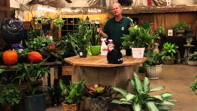 Indoor Gardening for Houseplants