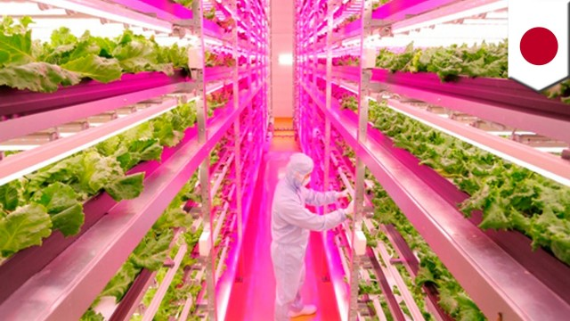 Shigeharu Shimamura teams up with GE to grow lettuce indoors faster, cleaner and cheaper