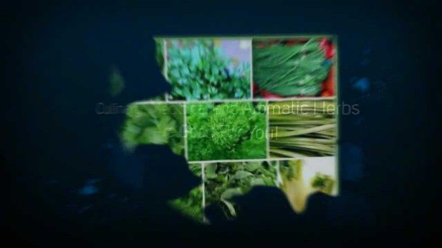 Hydroponics Halifax | Growing Hydroponic Herbs