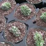 Gardening Rhythms: Vertical Garden /Succulents Part 1
