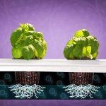 Best Vertical Grow Room   Big Buddha Box   Hydroponic Grow System   SuperCloset
