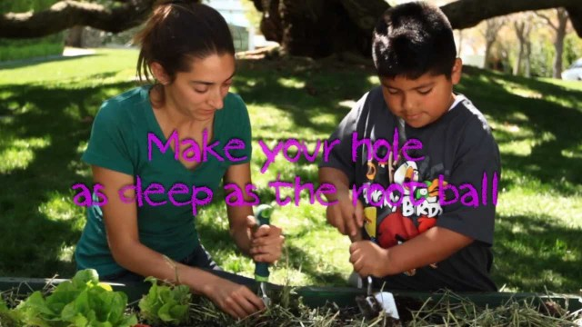 American Heart Association Teaching Gardens-Steps for planting seeds & seedlings