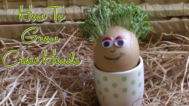 How to Grow Easter Egg Cress Heads: Gardening For Children